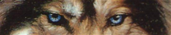 sample-wolfs-eyes